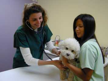 Pineview Vets - Exam Rooms